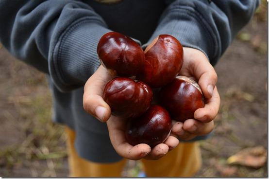 chestnut-913748_1280